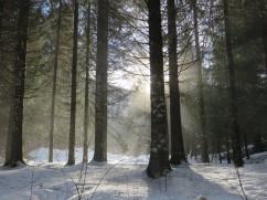 Nature hiver